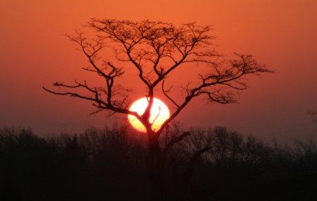 Sunrise_by_steveoshaug